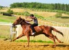 Programma-di-addestramento-cavalli-da-Palio-per-il-prossimo-mese-di-giugno
